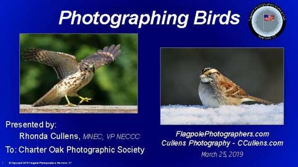 Flagpole-Photographers-Bird-Photography-for-Charter-Oak-Photographic-Society_Page_001