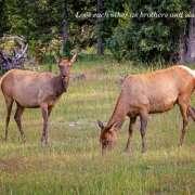 20120731-174810-Elk-at-White-Thumb-60D-adj-color-efex-c-20190822-072