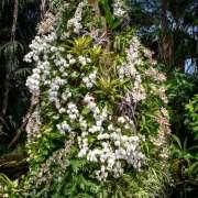 Flagpole Botanical Gardens Field Trip