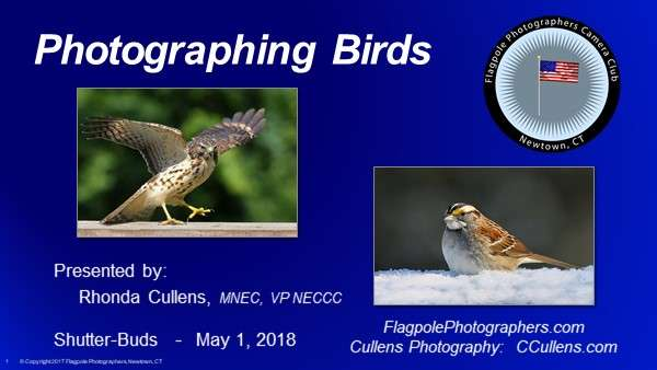 Presenting Photographing Birds at Shutter-Buds
